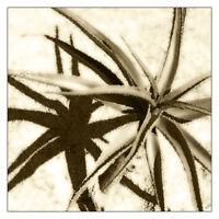 "Joshua Tree Sepia 12/"" x 16/"" Fine Art Print Vintage Style"