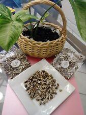 ( Organic )  Moringa Oleifera 100 Seeds benefits Health
