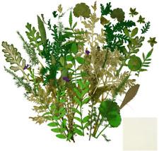 Bskifnn 39 Pcs Real Dried Pressed Leaf Flowers Plant for Art Craft Diy, Resin Je