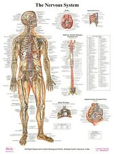 Movie Poster.Medical MAFIA.Italian film.Doctor ACA $.Modern Office decor.Anatomy