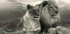 LION AND LIONESS B AND W 20X30 INCH CANVAS WALL ART COVERING HOME DECOR PRINT