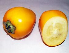 HIERBA NARANJERA TROPICAL deliciosa semillas seeds