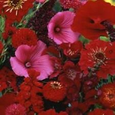 500 Wildflower Seeds Red Wildflower Mix Wild Flower Flower Seeds