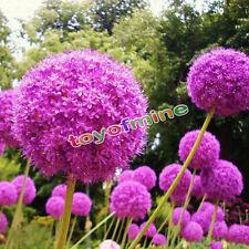 20 Semilla Cebolla Grande Bola Estrella Flor Gigante Allium Leek Puerro Aliáceas