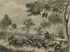 1850 Antique Engravings - KANGAROO HUNTING IN AUSTRALIA - Sticking Up A Boomer