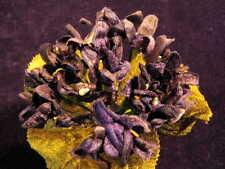 Millinery Flower Velvet Violet Bouquet Dk Blue Lot for Hat Wedding + Hair Y4
