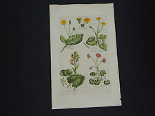 Sir John Hill, Botanical, The Vegetable System 1761-1775 Colts Foot #16