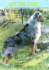 AUSTRALIAN SHEPHERD BELWOOD OUR DOGS OLD 1987 DOG BREED KENNEL ADVERT PRINT PAGE