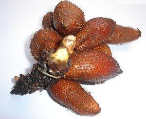 Thai Salacca / Salak / SALACCA ZALACCA Snake Fruit Seeds Rare, Very Hard to find