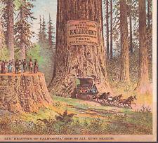 Dr Merriman Tooth Paste Kalliodont Teeth 1800's Oakland California Big Tree Card