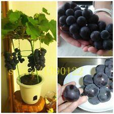 50/bag grape seeds bonsai UK fruit black grape seeds Dwarf grapes tree easy grow