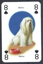 One Single Severino Baraldi Art Europe Trade Playing Card Dog MALTESE TERRIER