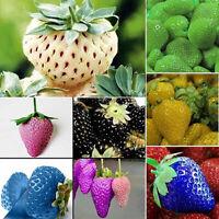 100 seltene köstliche Erdbeersamen wachsen Pflanzenfruchtsamen Hausgarten