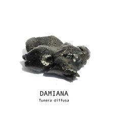 5 grams Damiana Tunera diffusa herbal resin extract
