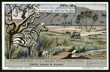 Zebra In Serengeti Africa National P 00004000 ark Africa 50 Y/O Trade Ad Card
