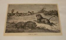 1878 magazine engraving ~ Sport In Africa, Lion Hunting