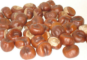 ANTI SPIDER REPELLER 80 REAL HORSE CHESTNUTS CONKERS, INSECT REPELLENT ECO HOME