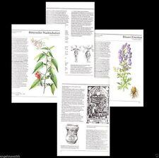 Kräuterbuch Kräuter Salben Drogen Tränke Pflanzen Anwendung Gesundheit Heilung