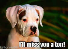 Dog Humor Pitbull I'll Miss You A Ton Refrigerator Magnet