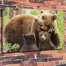 """Famiglia di orsi Scatola stampata foto su tela A1.30""""x20""""30mm telaio profondo Fauna Selvatica"""