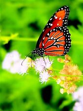 PHOTOGRAPHY BUTTERFLY MONARCH RED FLOWERS ART POSTER PRINT LV3573