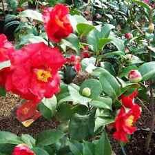 Kräuter-Pflanzen mit Rosmarin-Musik