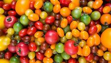 100 Graines de Tomate Variées