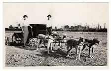 Rppc 2 People with cart hitched to 4 large dogs ( Irish Terriers ?), ca1910s-20s