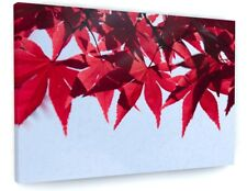 STUNNING NATURE WOODLAND TREE RED LEAVES CANVAS PICTURE PRINT CHUNKY FRAME #4142