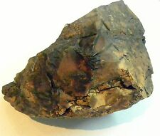1848 gram BIG black and gold desert rock from the Eilat mountains in ISRAEL