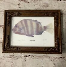 Acrylic Painting Numbered  Print, Sheepshead Ocean Fish, Karen Keene