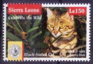 Sierra Leone 1995 MNH, Black Footed Cat, Wildcats, Animals