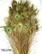 """50 Stem Dyed Iridescent Peacock Eye Feathers 30-35"""" length 11 colors available"""