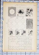 1886 Print Astronomie Le Soleil taches solaires diagrammes terrestres magnétisme