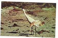 Adult & Immature Whooping Cranes Wild Water Birds Austwell Texas Postcard