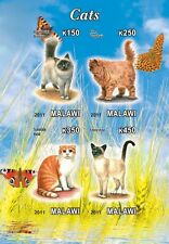 ** Domestic Cats  s/s  Malawi 2012 mint MNH IMPERF #C251