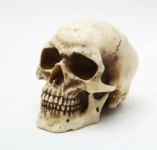 "Small Skull Head Statue Cold Cast Resin Figurine 3.5"" Tall"