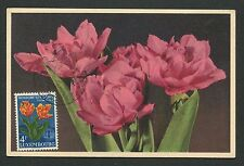 LUXEMBURG MK 1955 FLORA TULPE TULIP TULIPA MAXIMUMKARTE MAXIMUM CARD MC CM d3879