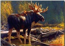 Art Animal oil painting:an Alaskan Moose 24x36