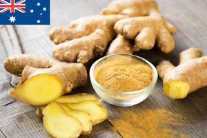 Fresh Ginger Seeds 100 Spice Spring Vegetable Seed