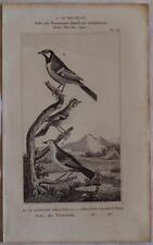 BUFFON ORIGINALE 1850 UCCELLI BIRDS SCRICCIOLO CINCIALLEGRA WREN GREAT TIT
