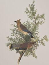 Audubon - Cedar Bird. 43 - Birds of America Abbeville Edition FOLIO
