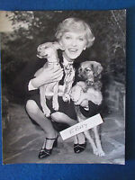 "Original Press Photo - 10""x8"" - Katie Boyle -1976 - at Battersea Dogs Home"