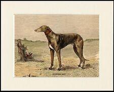 GREYHOUND BOY AND DOG CHARMING DOG PRINT MOUNTED READY TO FRAME