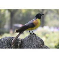 Artificial Thrush Bird Realistic Taxidermy Home Garden Decoration Toy #11