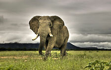 Royalty Free Stock Photo 6000+ 2 Dvd All South Africa food travel animals