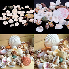 100g Beach Mixed SeaShells Mix Sea Shells Shell Craft SeaShells Aquarium DecorMW