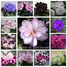 50Pcs African Violet Flower Seeds Saintpaulia 30 Kinds Garden and Potted Plants