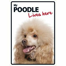 My Poodle Lives Here A5 Plastic Sign