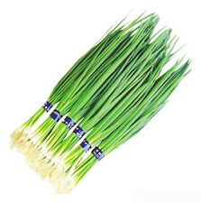 100 Chive Seeds Spring Onion Shallot Allium Schoenoprasum Scallion Organic